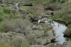 agua-forestal
