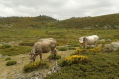 El proyecto fomenta la creación de empresas en el Parque Nacional Sierra de Guadarrama